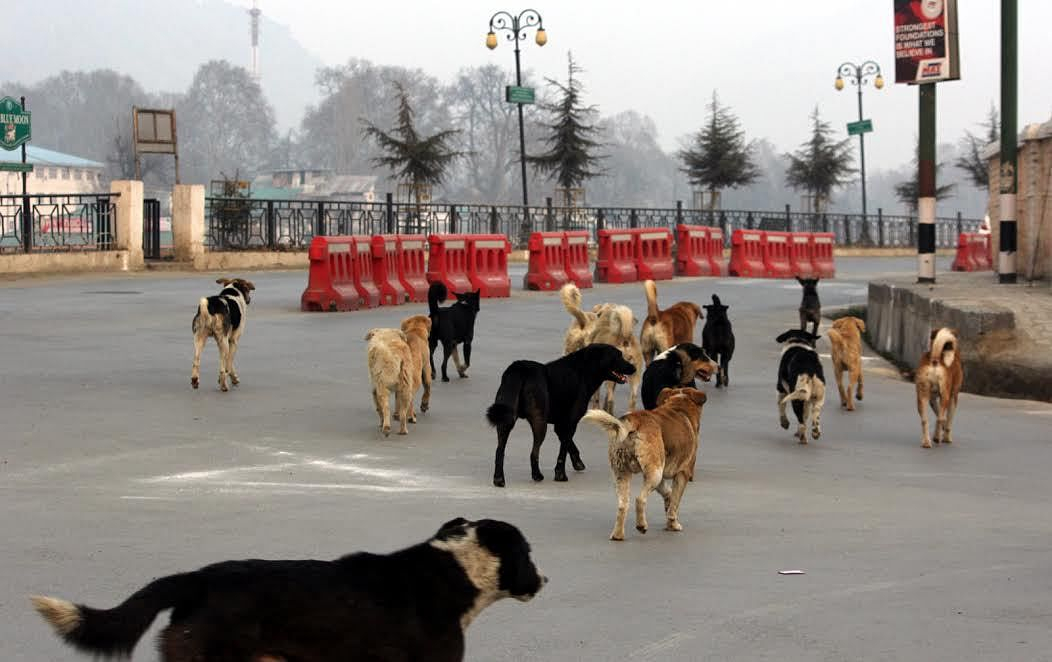 World Rabies Day: Kashmir reports over 52000 dog bite cases in 9 years