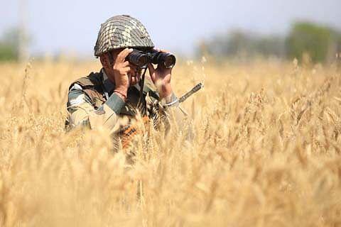 BSF demands FIR against Pak pigeon
