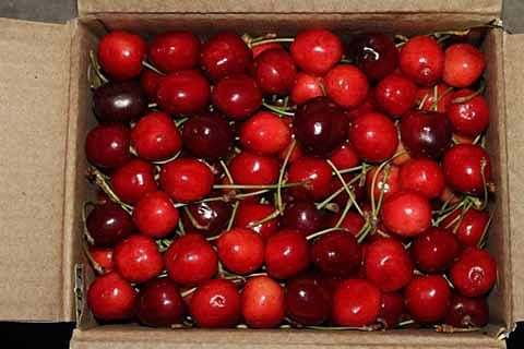 Decline in cherry prices result of supply, demand mismatch: Canners