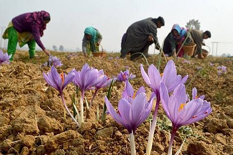 Centre extends saffron mission for 2 more years