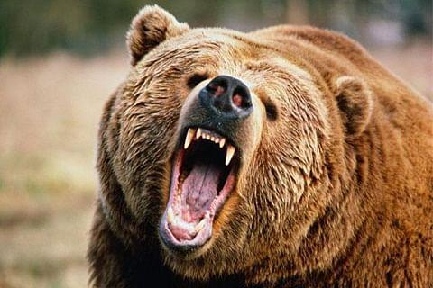Man injured in bear attack in J&K's Poonch