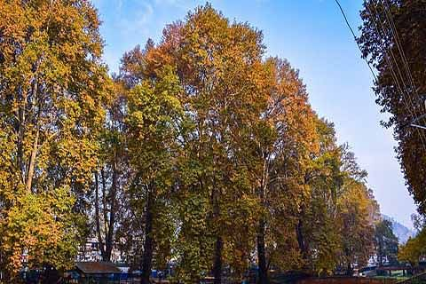 CHINAR: Where is the fire now !
