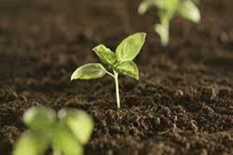 On Organic Farming