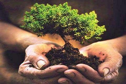 BJYM urges people to plant trees for protecting environment