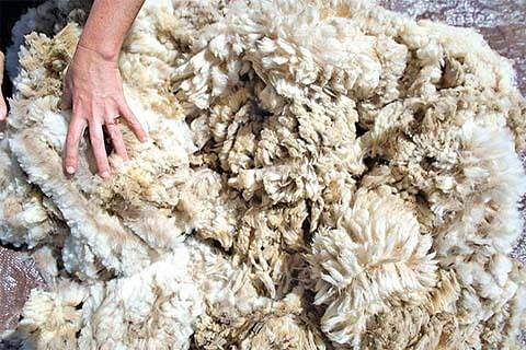 Kashmir sells 34 lakh kgs of raw wool at throwaway price due to lack of processing units