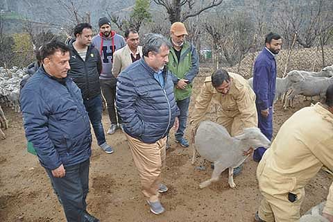 J&K Govt to setup sheep markets in every district