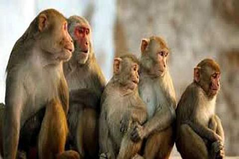 Woman falls from terrace after monkey attack in UP, dies