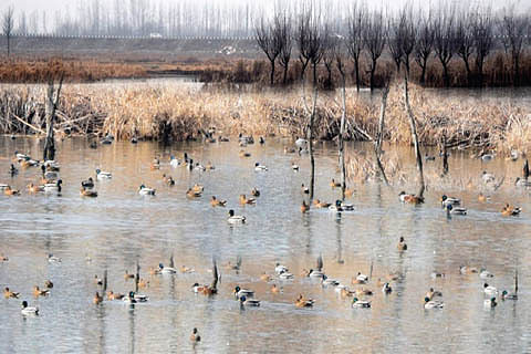 Eyeing the Pampore Wetlands ?