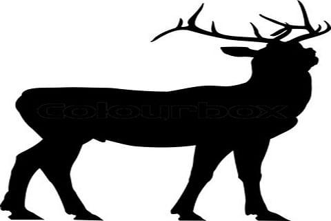 Deer rescued along Rajouri LoC