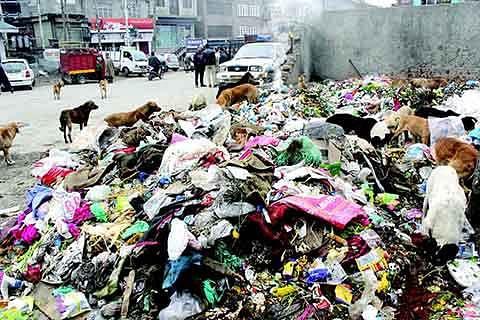 Summer capital lacks solid waste management infrastructure: Survey
