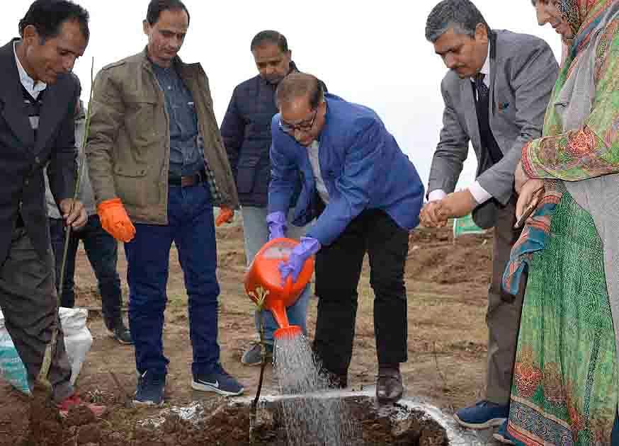 Horticulture deptt to establish 3 walnut nurseries in Kashmir