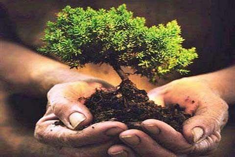 Sant Nirankari Mission followers plant saplings in Batote