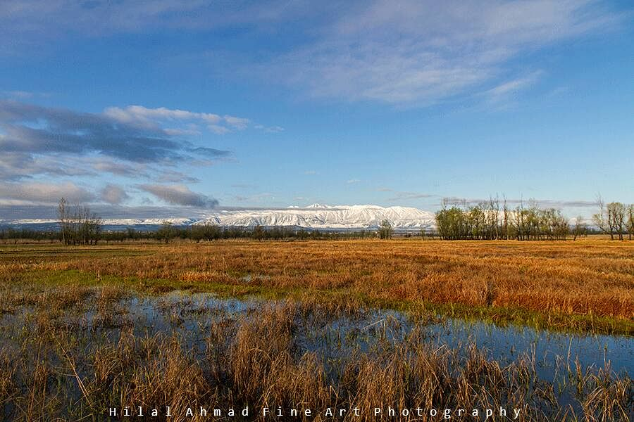 Famed Shalbugh wetland fast losing its sheen