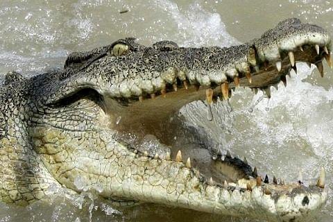 Gujarat: Boy rescued from jaws of crocodile by friends