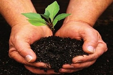 Army hold afforestation drive in Gurez Valley
