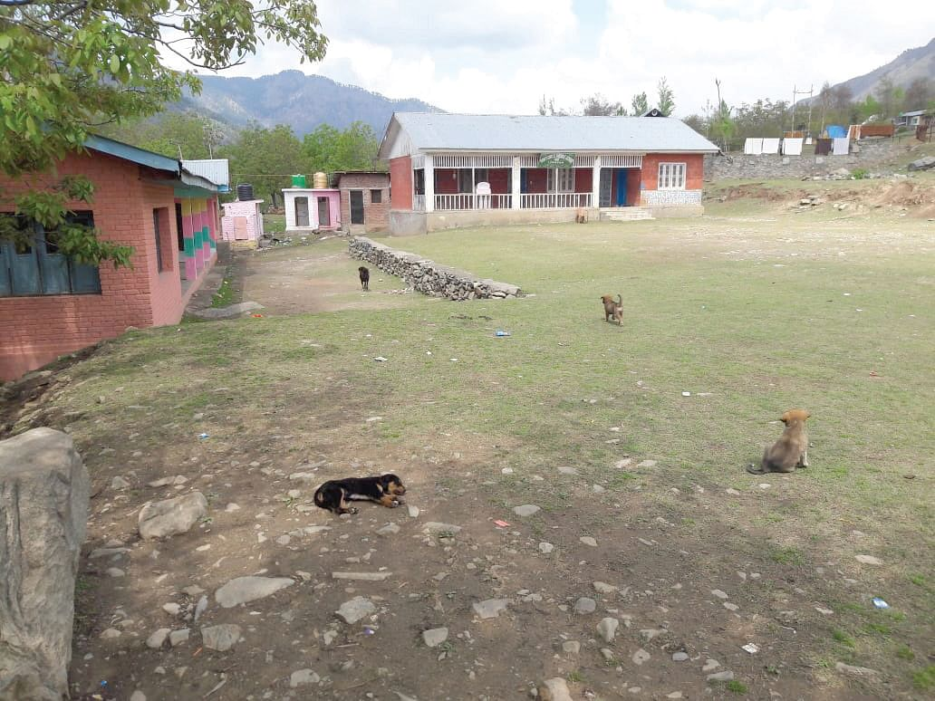 Stray dogs and cows are a constant presence in this school without a boundary wall
