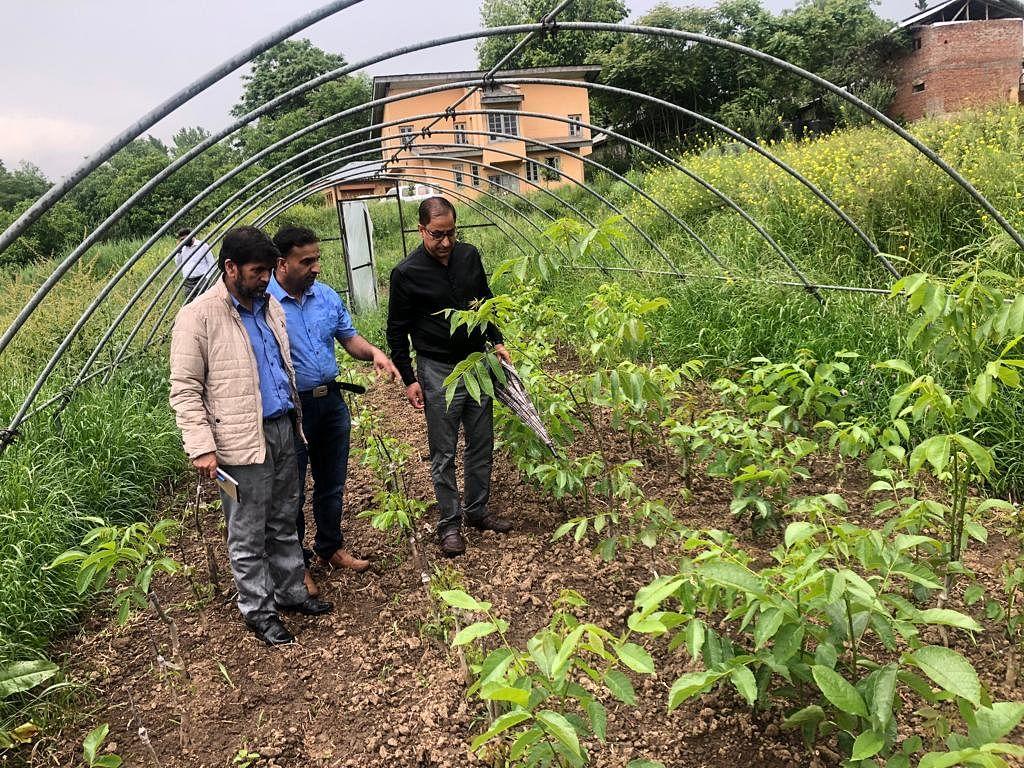 Dir Horticulture reviews sponsored schemes in Budgam