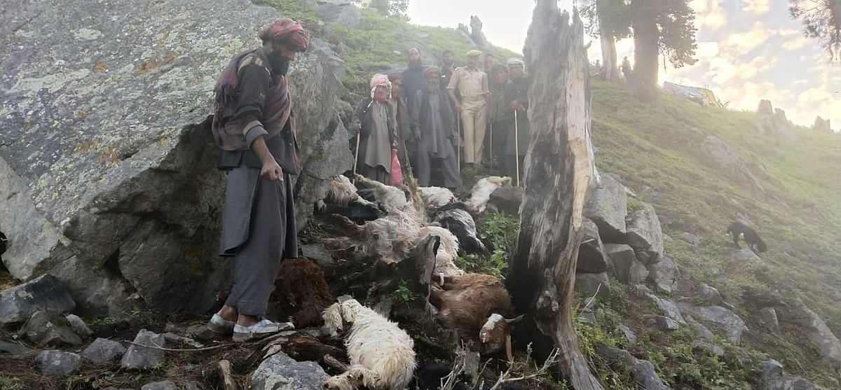 170 sheep and goats perish after lightning strikes Banihal
