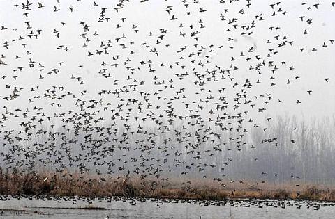 Admin starts demarcation of Hokersar wetland in Srinagar