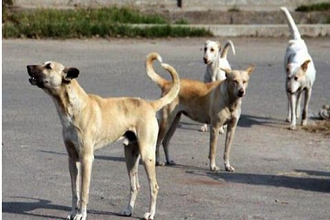 Canine terror continues in Srinagar, authorities in slumber