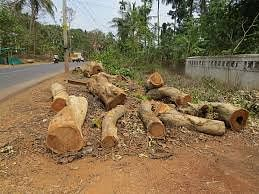 Govt allowed 1 crore trees to fall in 5 years: Env Ministry