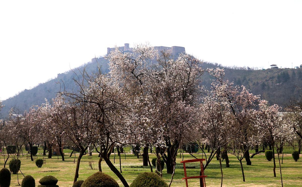 Almonds Bloom at Badamwari Closed Over Covid-19