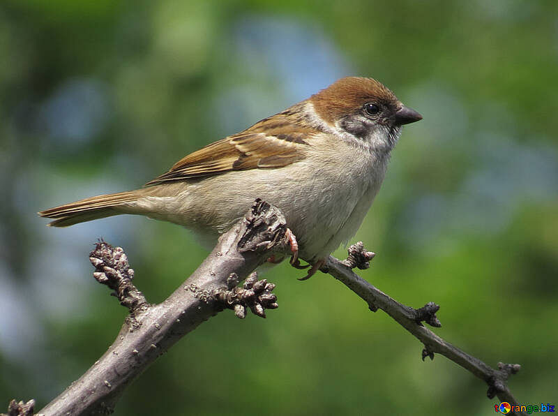 House sparrows: my companions in the lock down