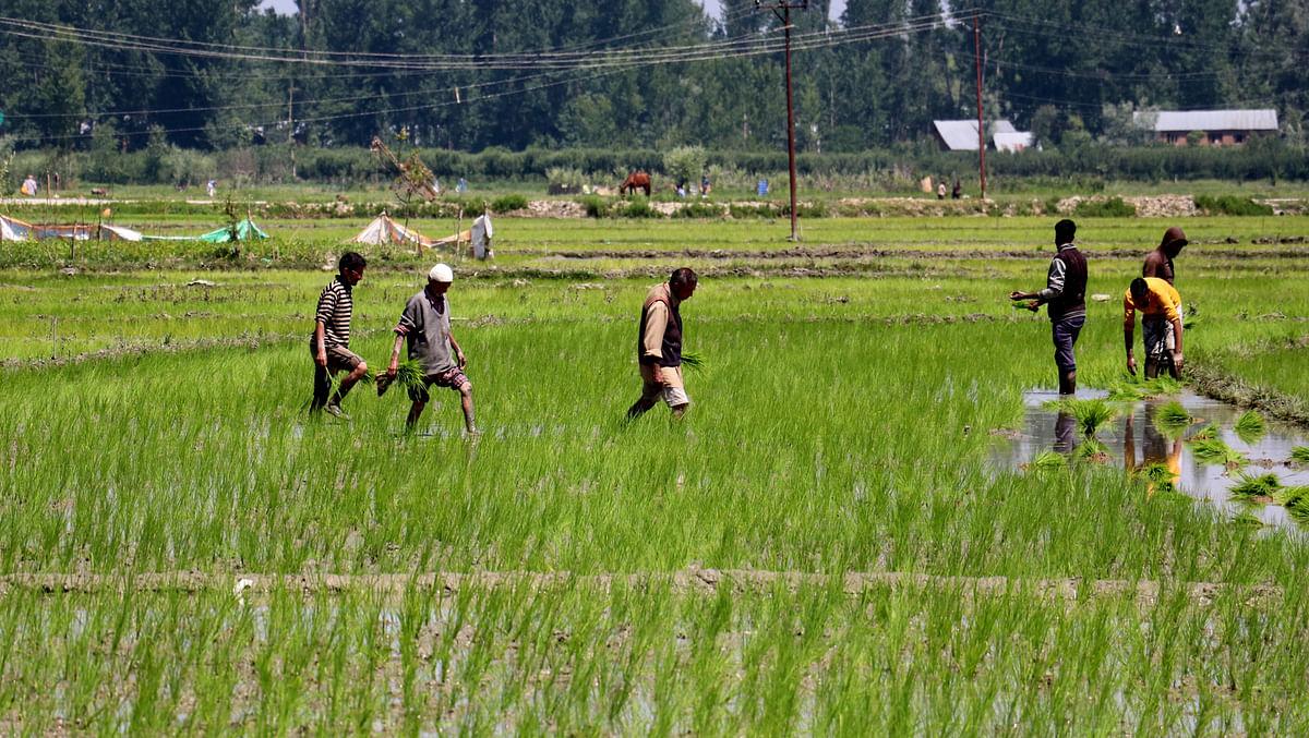 Revolutionizing the farming