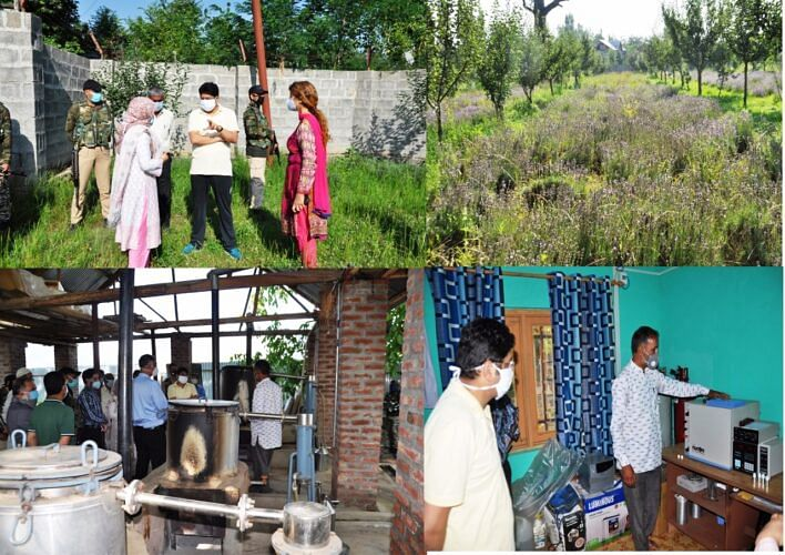 DDC for tapping high value Lavender potential in Pulwama