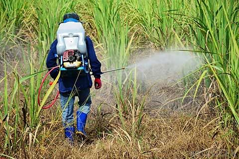 Pesticides ban unlikely to dent agrochem revenues much