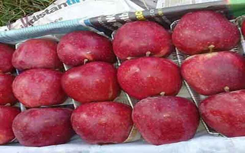Import of Iranian apple; Fruit bodies call on custom officials