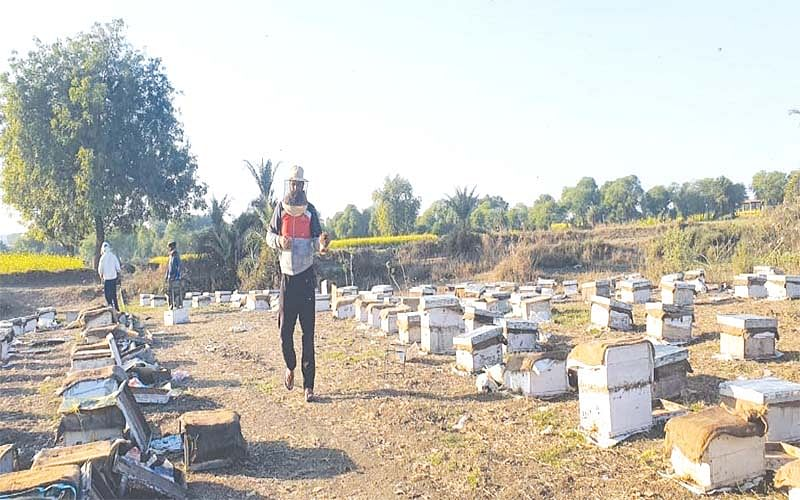 J&K beekeepers hit as farmers'spray pesticides