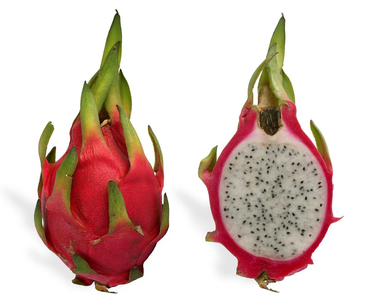 BJP govt in Gujarat renames Dragon Fruit as 'Kamalam', CM Rupani says 'outer shape of fruit resembles lotus'