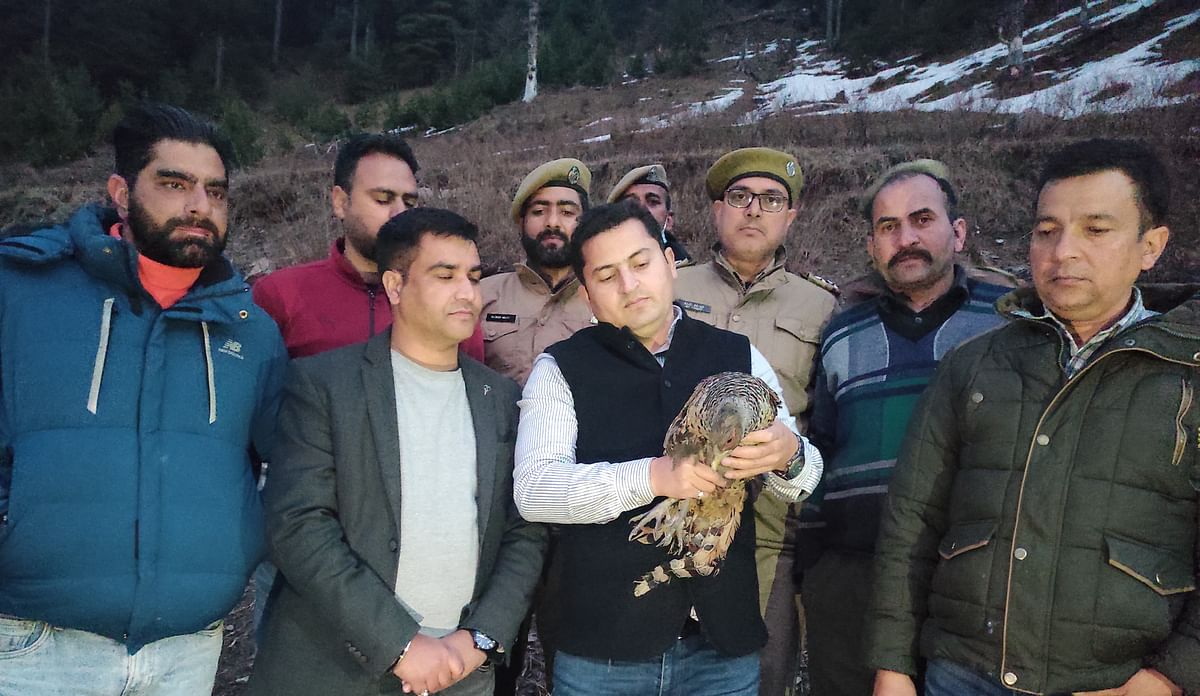 Critically endangered pheasant rescued in J&K's Bhaderwah