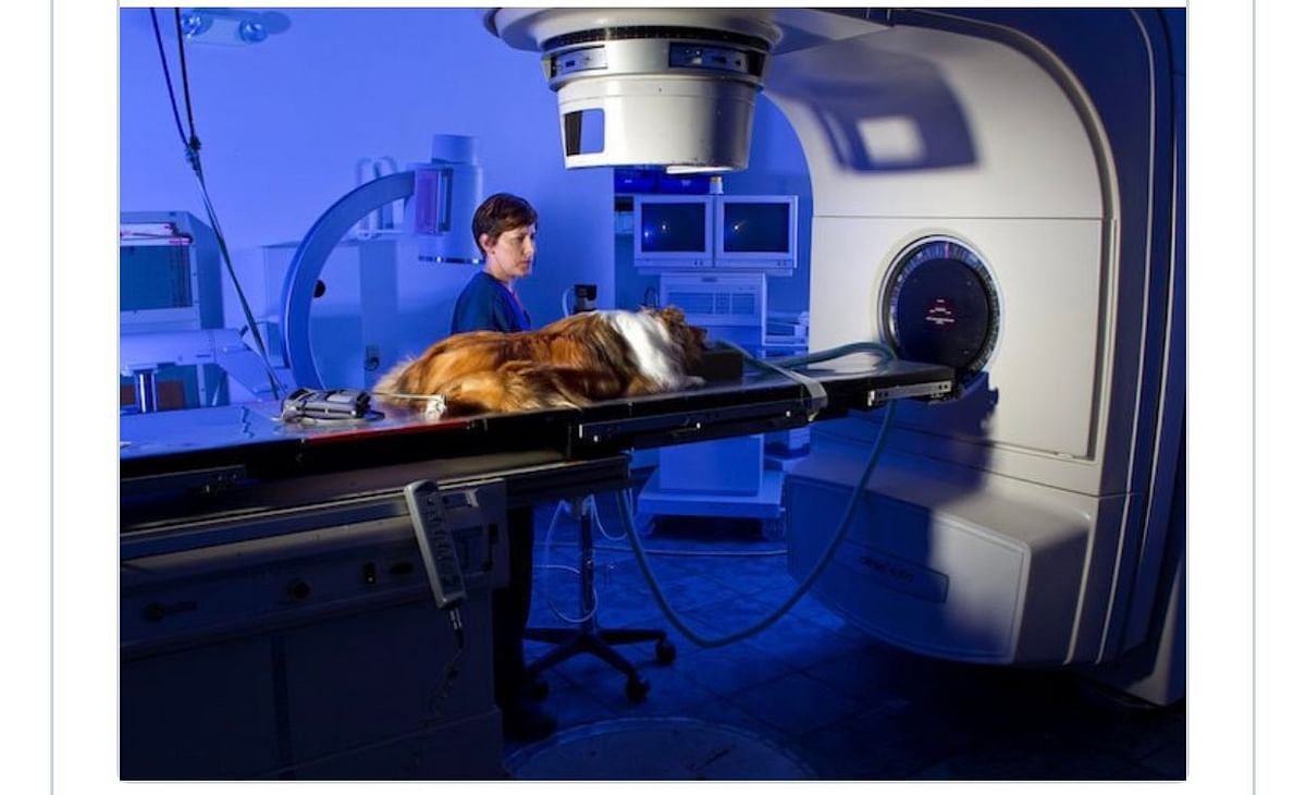 A Dog In US Gets Better Treatment Than Cancer Patients In Lagos