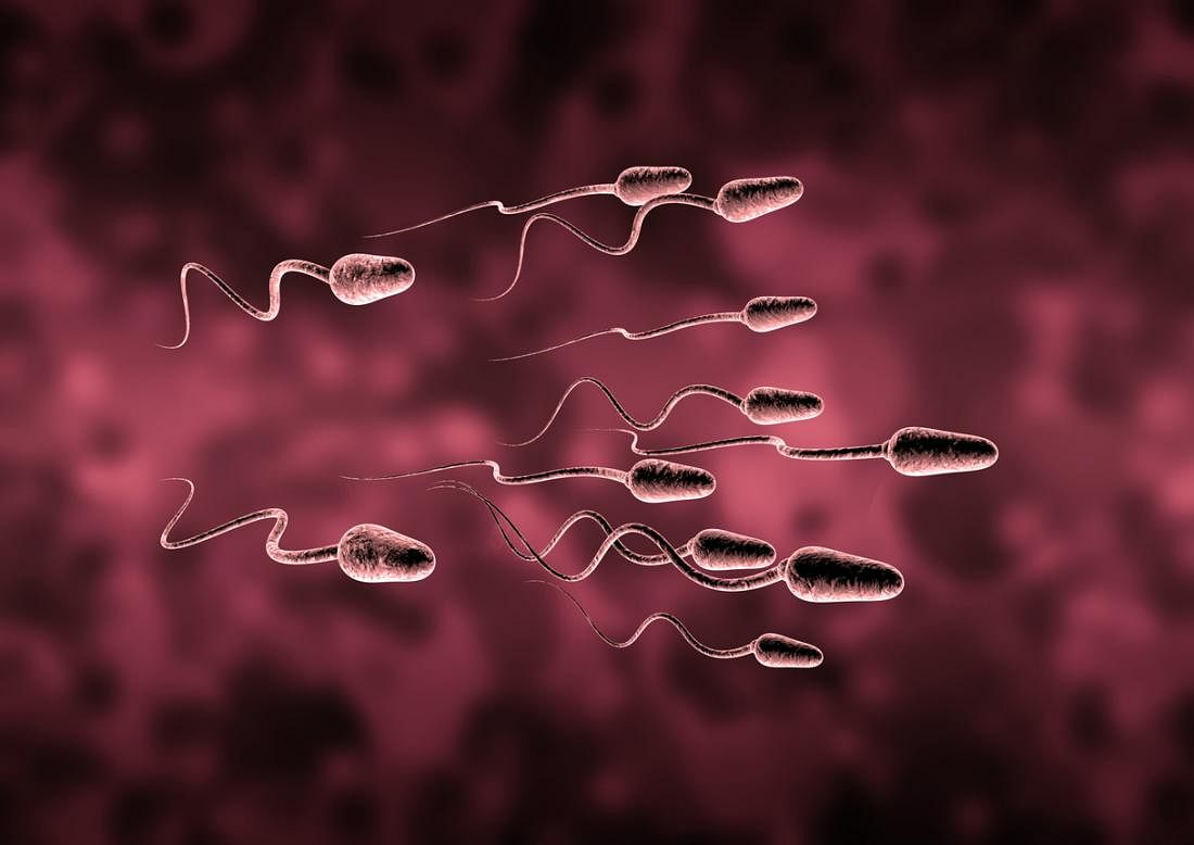 Men! These Are 8 Natural Ways To Increase Your Sperm Count