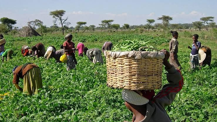 World Bank Expert: Neglect Of Agric Sector Costs Nigeria $10BN Annually