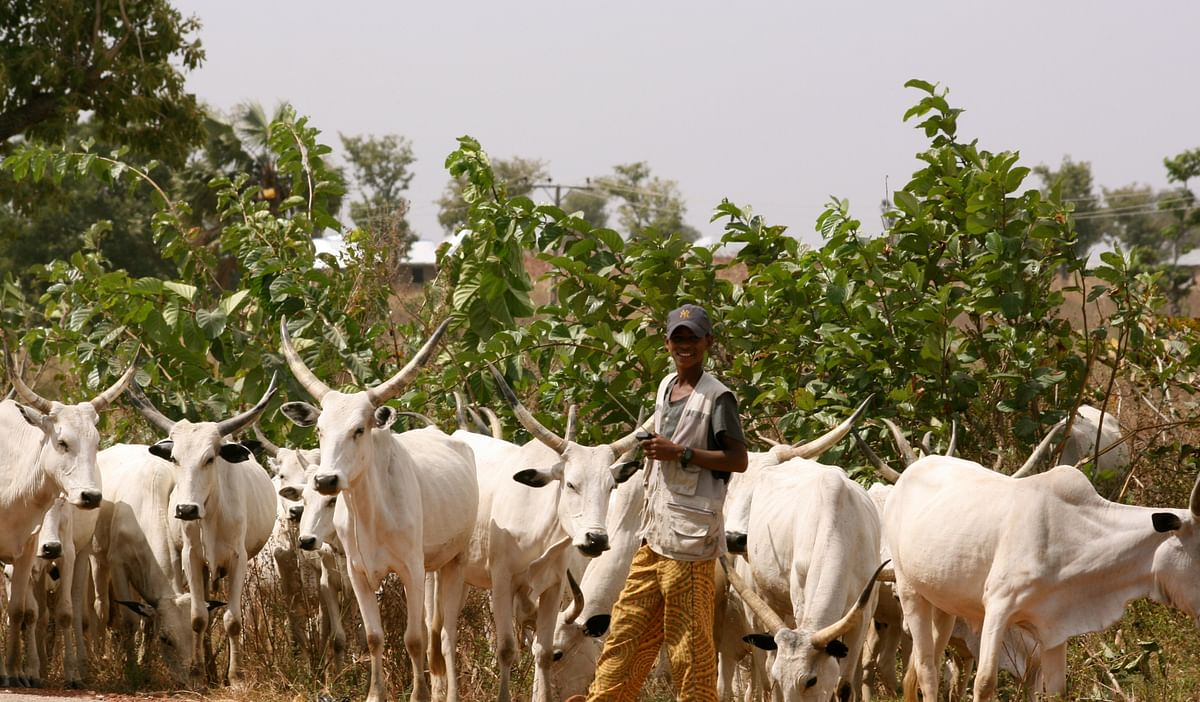 RUGA: What it Means and Why Nigerians Distrust the Scheme (Opinion)