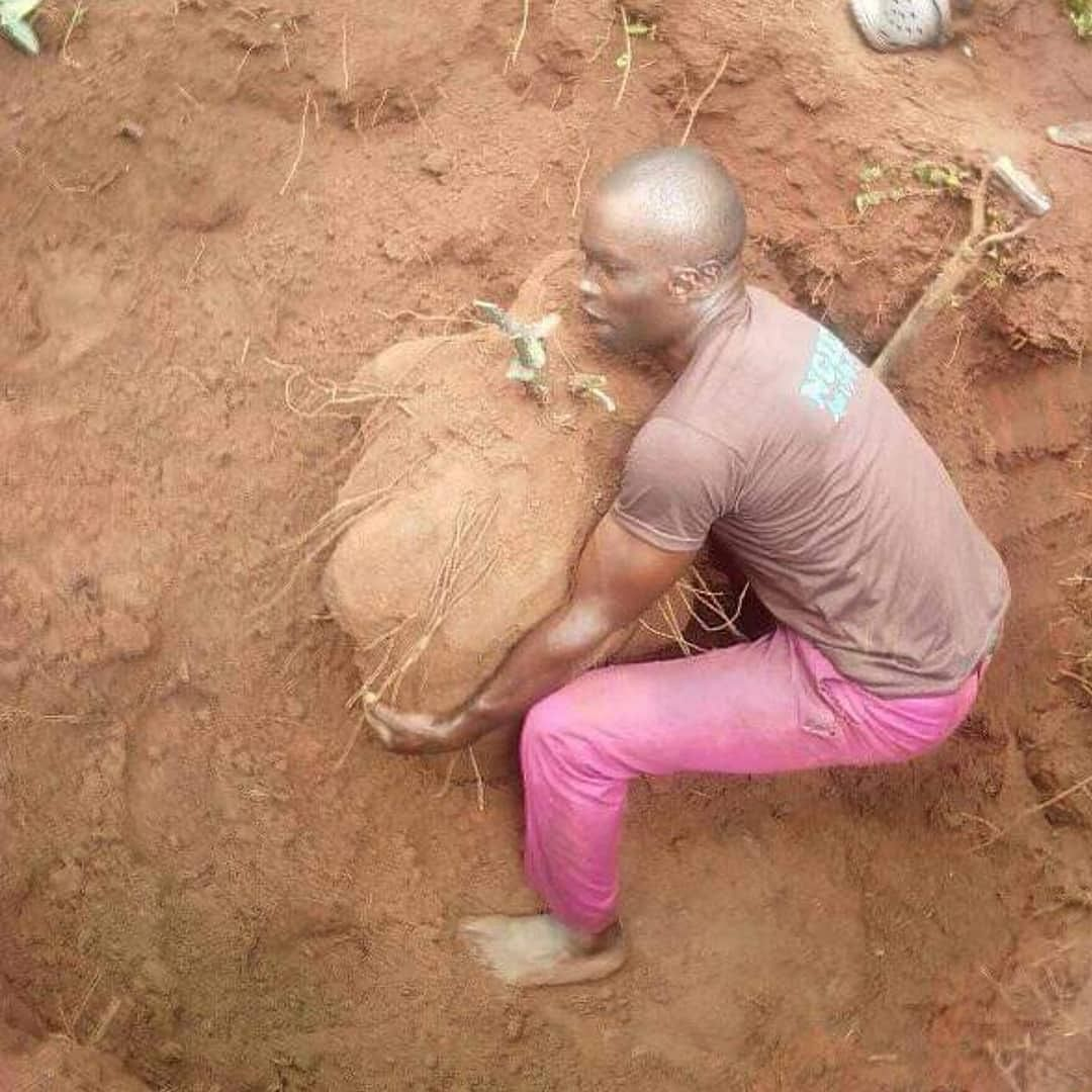 Imo State Farmer Harvests Gigantic Yam Weighing 180kg
