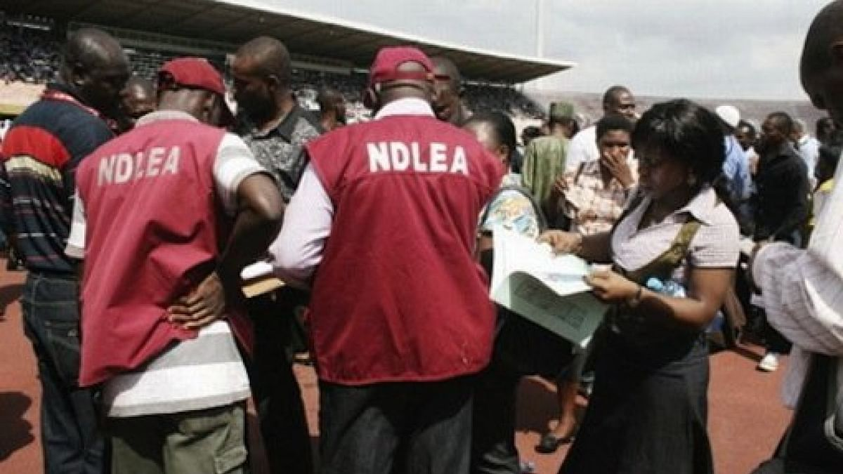 NDLEA Destroys 40 Hectares Of Hemp Plantation