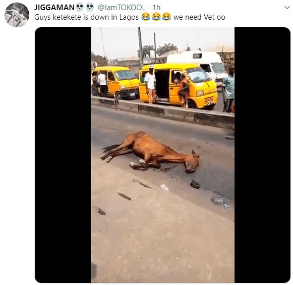Horse Collapses In Lagos