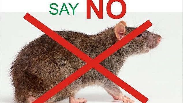 50 People Under Close Watch In Anambra For Lassa Fever