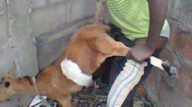 Man Caught Having Sex With Pregnant Goat In Ado Ekiti