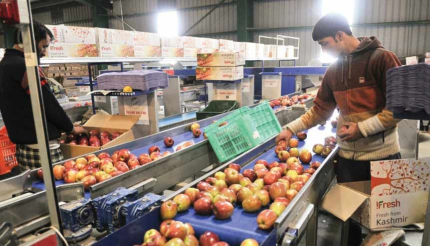 A worker picking up newly harvested apples to pack them in boxes at Lassipora cold storage in India. A multitude of agri-tech start-ups are working on improving the food value chain by reducing waste.