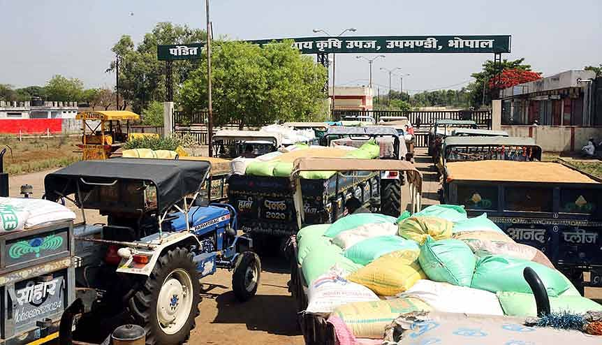 Long queues of tractors seen as farmers wait to sell their wheat grains at wholesale grain market. The Essential Commodities Act will allow farmers to sell their produce outside the APMC mandis and introduce liberalization into the sector.