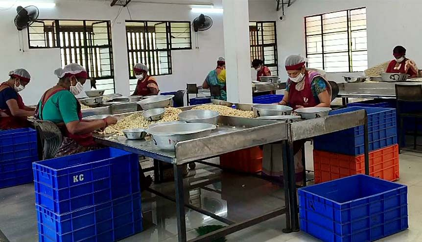 A cashew processing unit operating in India. If India considers lifting restrictions on imports of key items such as black pepper and cashew nuts, Vietnamese agricultural exporters could unlock a new regional market.