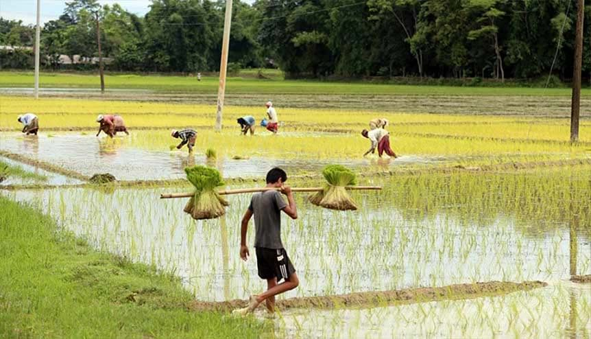 A farmer farming paddy field at Jokai, in Dibrugarh. The recently passed reforms enable the farmers to eliminate the middleman and let farmers sell their produce directly to buyers.