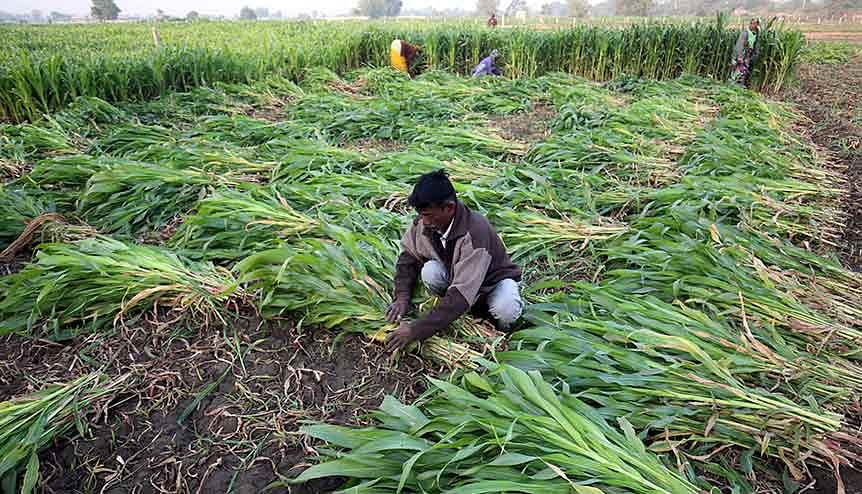 Digitalisation has brought a fresh breath to India's agricultural culture