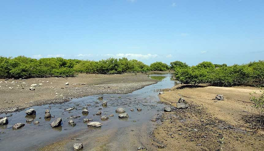 Indian and UK scientists team up to clean Indian coasts