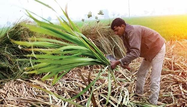 The IMF has endorsed the farming reforms initiated by the government stating that it has the potential to transform the sector in India.